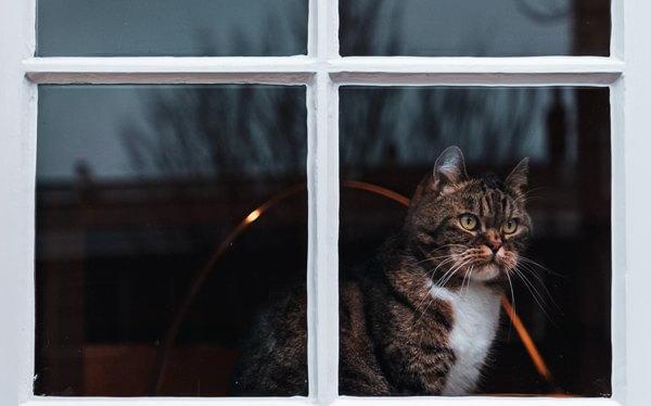 窓から家の外を眺めている写真